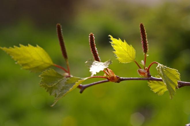 leaf-1359039_1280