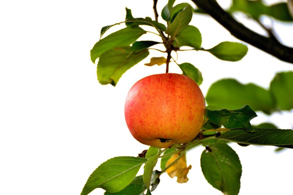 apple-3703990_960_720