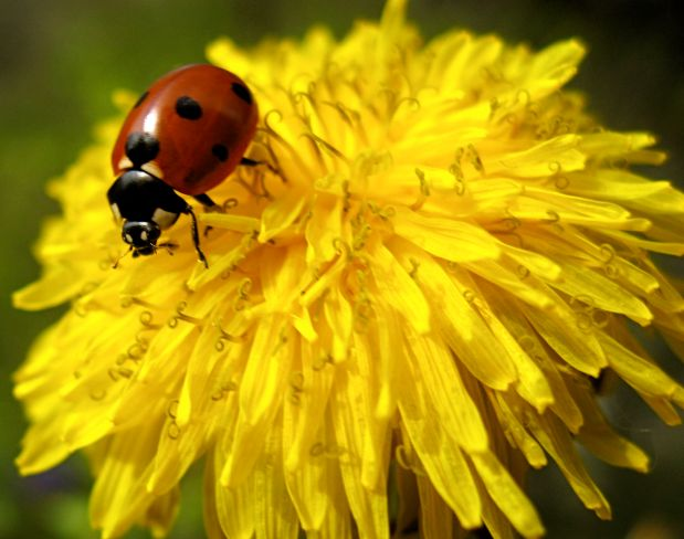 Vom Käfer, der nicht wusste, dass er fliegenkann
