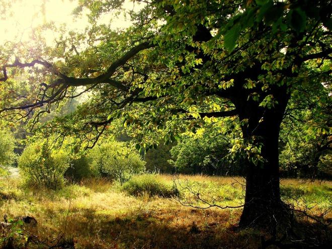 oak-1605710_1280