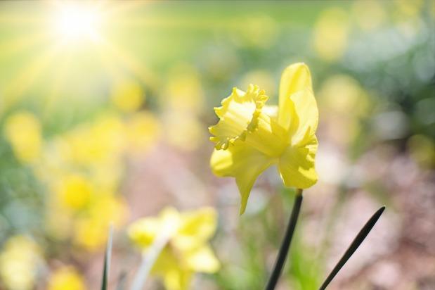 Ein Abenteuer für die BlumenelfeJulika