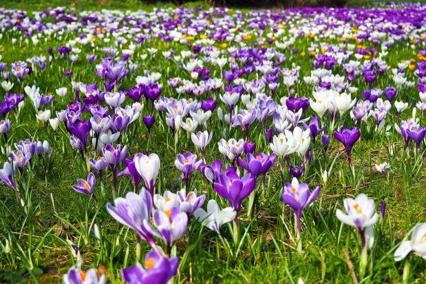 Frühlingsschwung *
