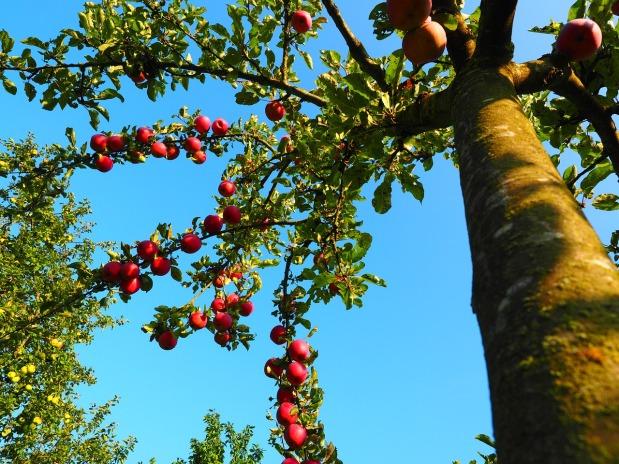 Wolkenbahnhof Apfelbaum