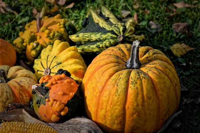 pumpkins-4397745_1280