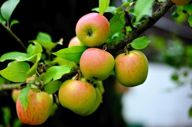 Begegnung unterm Apfelbaum