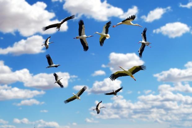 Storchenreise in denSüden