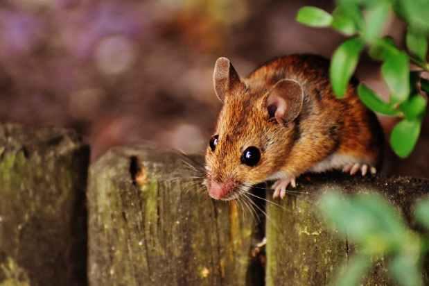 Mäusefreundinnen (Reizwortgeschichte)