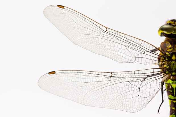 Die Elfe Sumsinella und Muck, der Mückenmann(12)